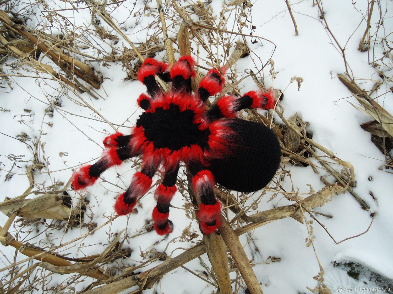 паук с красными лапками украина фото описание желание моей