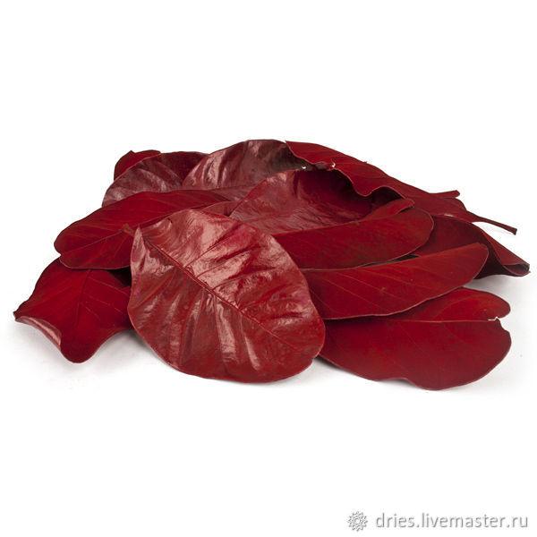Материалы: листья мандиока большие красный, , Москва, Фото №1