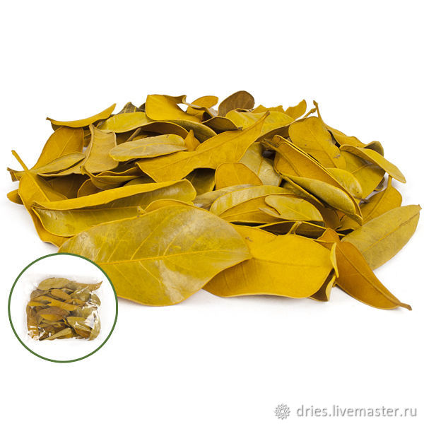 Материалы:  листья мандиока малые жёлтый, , Москва, Фото №1
