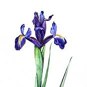 """Картины и панно ручной работы. Ярмарка Мастеров - ручная работа """"Ирисы"""" серия ботанических иллюстраций. Handmade."""