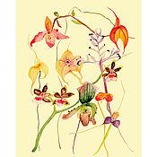 Иллюстрации ручной работы. Ярмарка Мастеров - ручная работа Ботаническая иллюстрация-плакат ОРХИДЕИ (1), А3. Handmade.