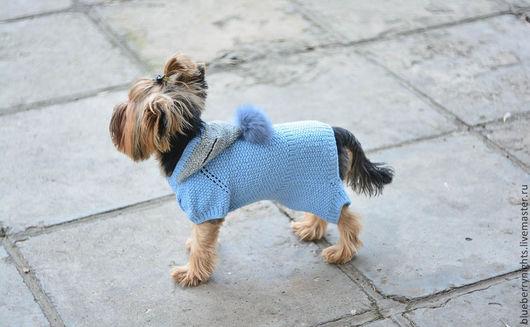 Одежда для собак, ручной работы. Ярмарка Мастеров - ручная работа. Купить Комбинезон на маленькую собачку. Handmade. Голубой, помпон