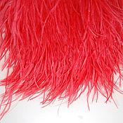 Материалы для творчества handmade. Livemaster - original item Trim of ostrich feathers 10-15 cm red (scarlet). Handmade.