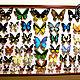 Самые красивые Бабочки Мира (подборка 1)
