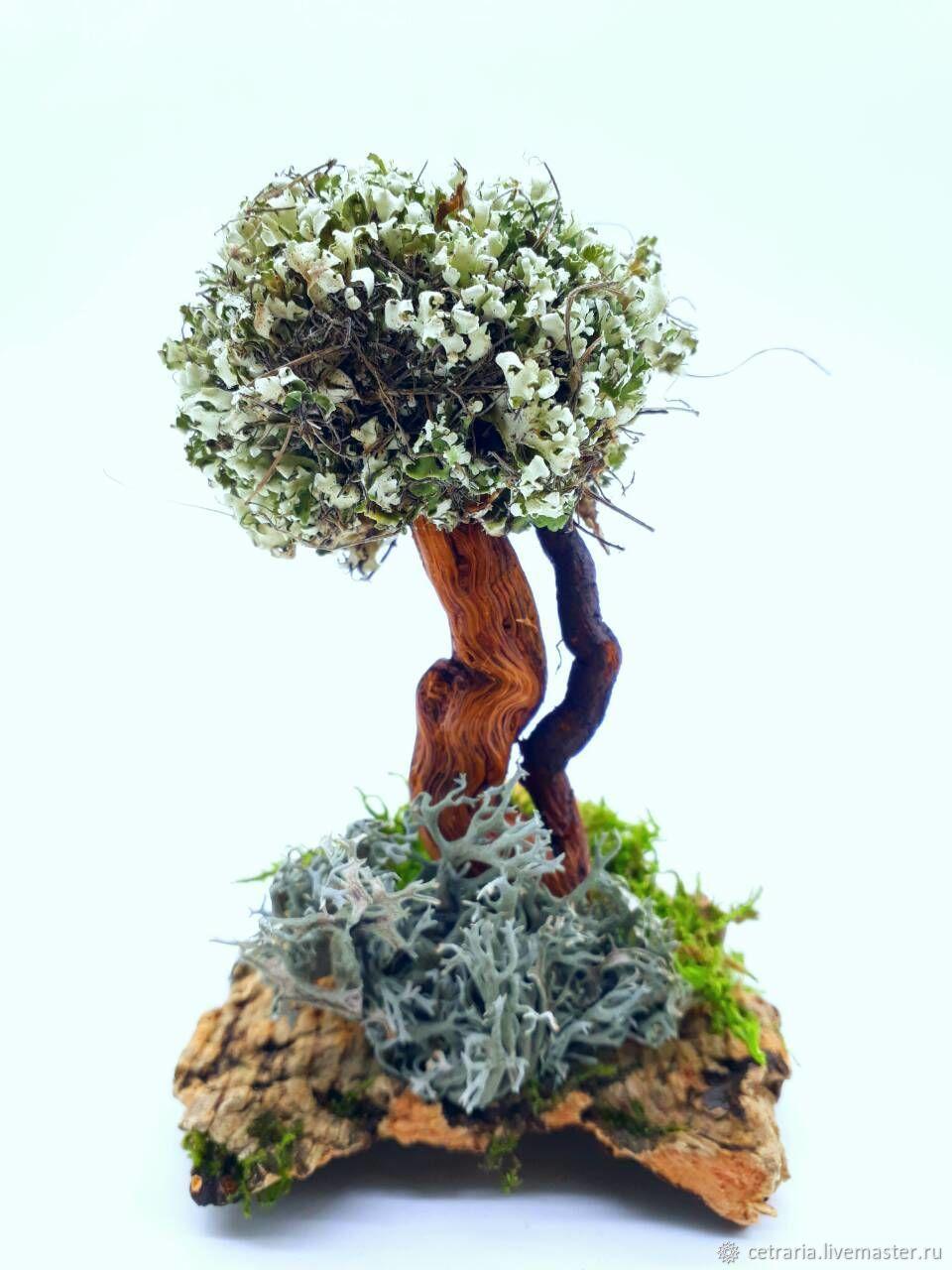 Дерево с кроной из целебной цетрарии для очищения воздуха ...