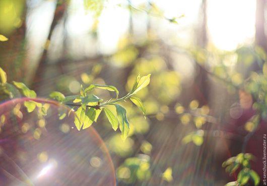 Фотокартины ручной работы. Ярмарка Мастеров - ручная работа. Купить Весна. Handmade. Салатовый, фотография, фотография для интерьера, фотография авторская