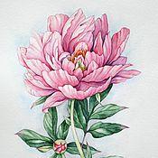 """Картины и панно ручной работы. Ярмарка Мастеров - ручная работа Рисунок """"Розовый пион"""" акварель. Handmade."""
