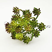 Материалы для творчества handmade. Livemaster - original item Artificial greenery, succulents СV101. Handmade.