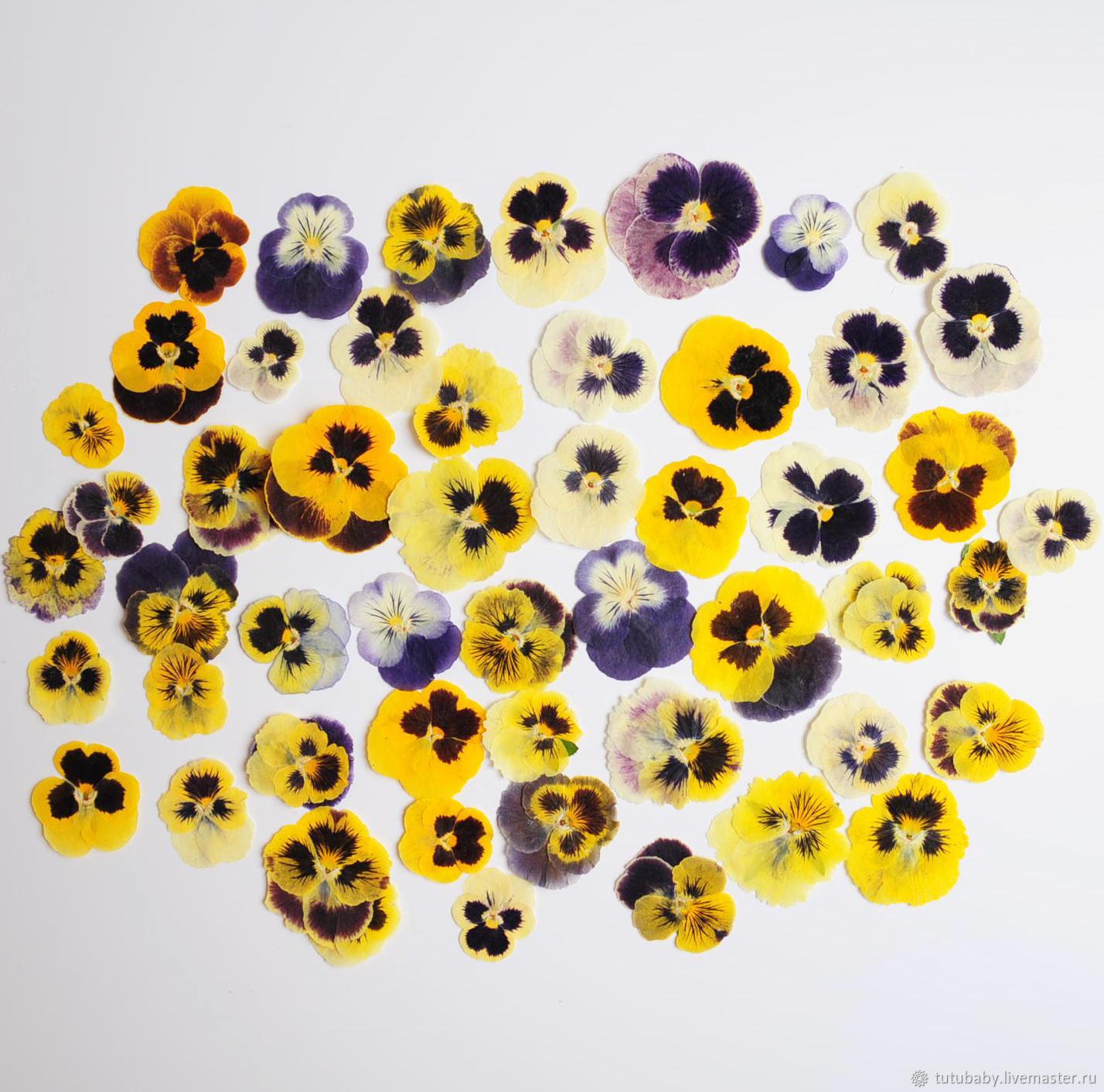The dried flowers of viola, pansies, Grass, Buzuluk,  Фото №1
