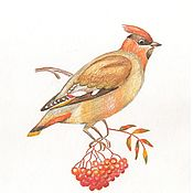 """Картины ручной работы. Ярмарка Мастеров - ручная работа Рисунок карандашами """"Птичка"""" картина в детскую. Handmade."""