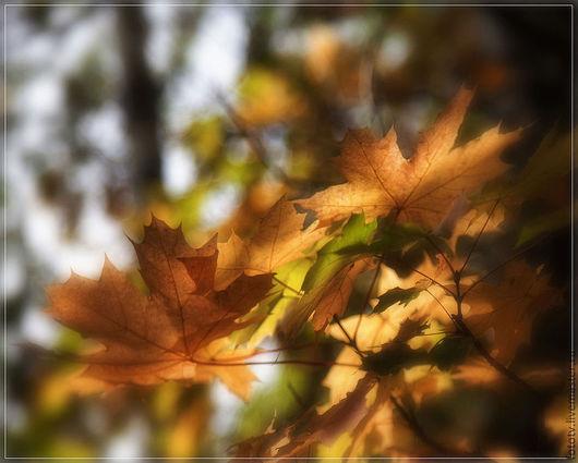 Фотокартины ручной работы. Ярмарка Мастеров - ручная работа. Купить Осенние листья. Handmade. Осень, листья, солнечный, пейзаж, гармония