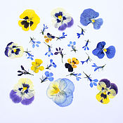 Материалы для творчества handmade. Livemaster - original item Set of dried flowers, flat drying, collection 2021. Handmade.
