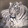 Серебряный тигр - Ярмарка Мастеров - ручная работа, handmade