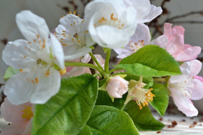Яблоня, Цветы, Кемерово,  Фото №1