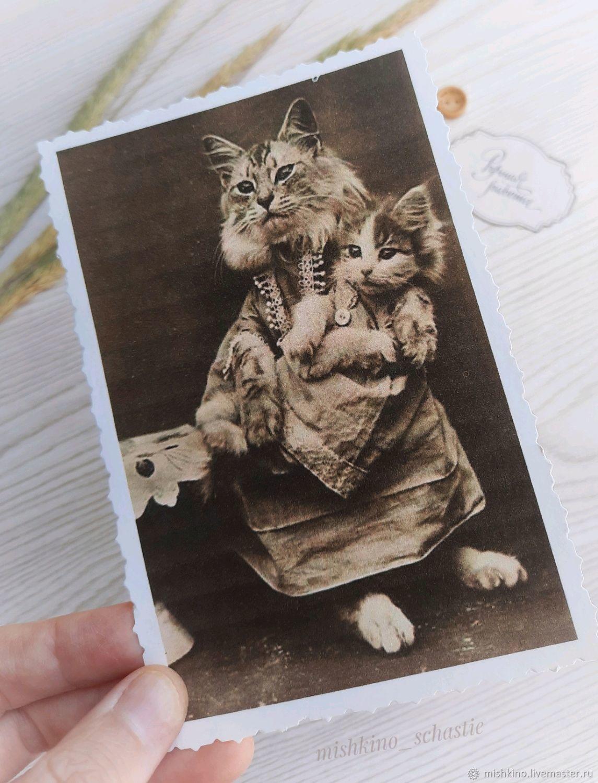 Cat1 Postcard, Cards, Taganrog,  Фото №1