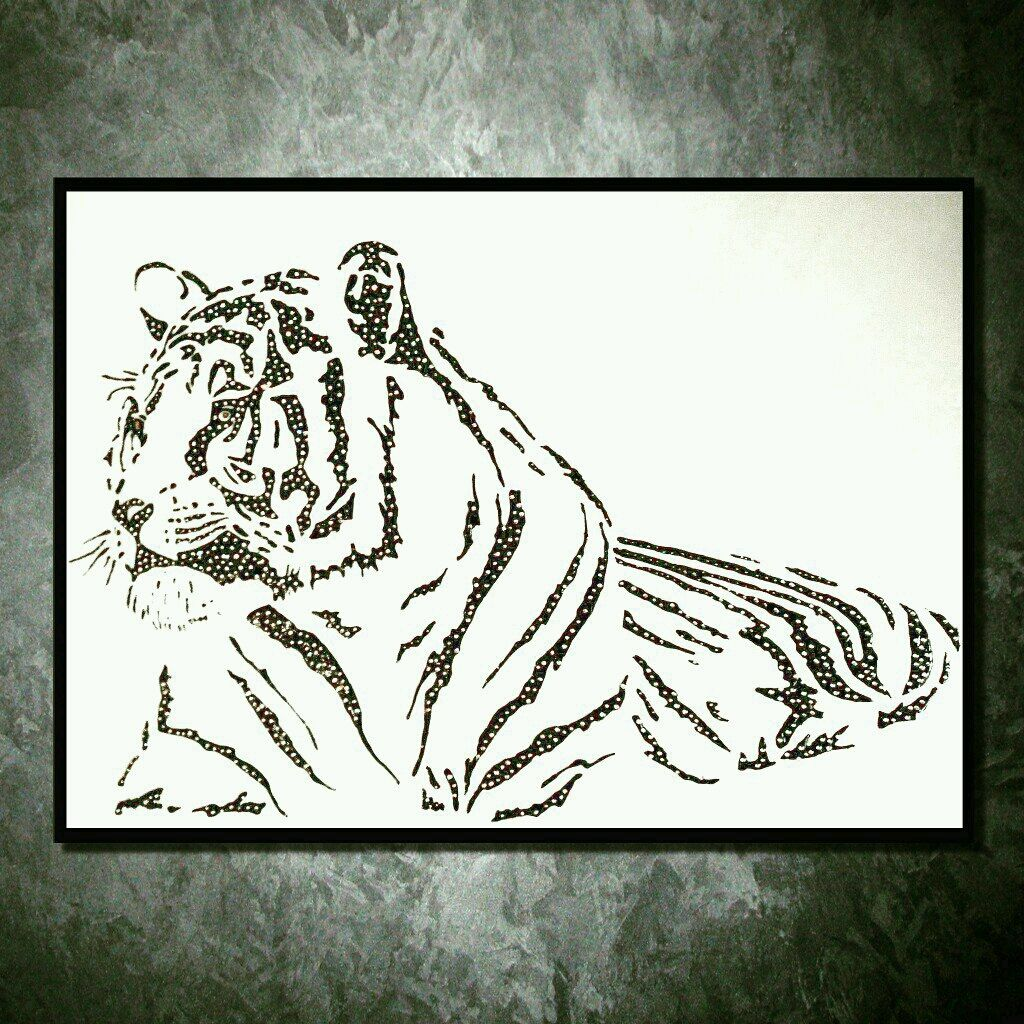 White tiger, Pictures, Makhachkala,  Фото №1