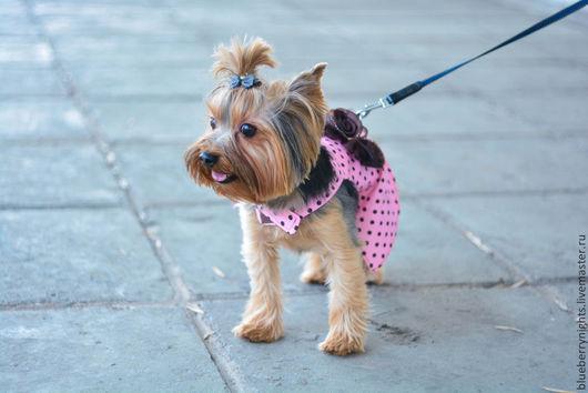 """Одежда для собак, ручной работы. Ярмарка Мастеров - ручная работа. Купить Платье для маленькой собачки """" Принцесса """". Handmade."""