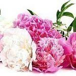 FlowerArtClub - Ярмарка Мастеров - ручная работа, handmade