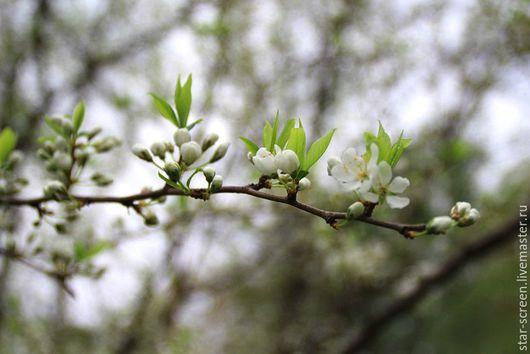 фотокартина природа. фотокартина весна.  листья весна.  картина о весне. фотокартина о весне.  весенний пейзаж. зеленый весна. зеленый. серый.белый. бежевый. зеленый и белый. весенняя  листва.