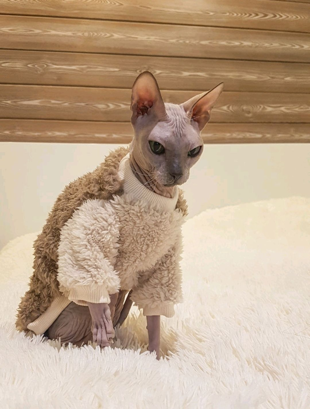 Clothing for cats 'Coat chocolate', Pet clothes, Biisk, Фото №1