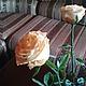 Искусственные растения ручной работы. Заказать роза из полимерной глины. Olga Tsvetkova. Ярмарка Мастеров. Розы ручной работы