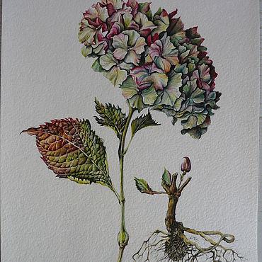 Картины и панно ручной работы. Ярмарка Мастеров - ручная работа Картины: Акварельная ботаника картина. Handmade.