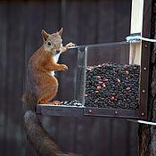 handmade. Livemaster - original item Squirrel feeders transparent