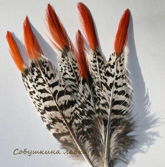 Другие виды рукоделия ручной работы. Ярмарка Мастеров - ручная работа. Купить Перья фазана (длинные). Handmade. Перья