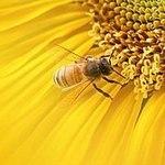 "Мастерская подарков ""Пчелка"" (pchelka-podarok) - Ярмарка Мастеров - ручная работа, handmade"