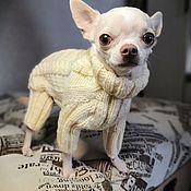 Одежда для питомцев ручной работы. Ярмарка Мастеров - ручная работа Комбинезон для собак мелких пород. Handmade.