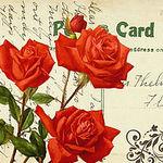 luba (Red-Rose) - Ярмарка Мастеров - ручная работа, handmade