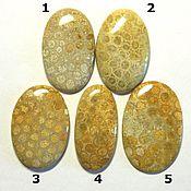 Материалы для творчества ручной работы. Ярмарка Мастеров - ручная работа 1 Коралл кабошон камень натуральный для украшений окаменелость. Handmade.