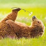 Рукодельня Бурой медведицы - Ярмарка Мастеров - ручная работа, handmade