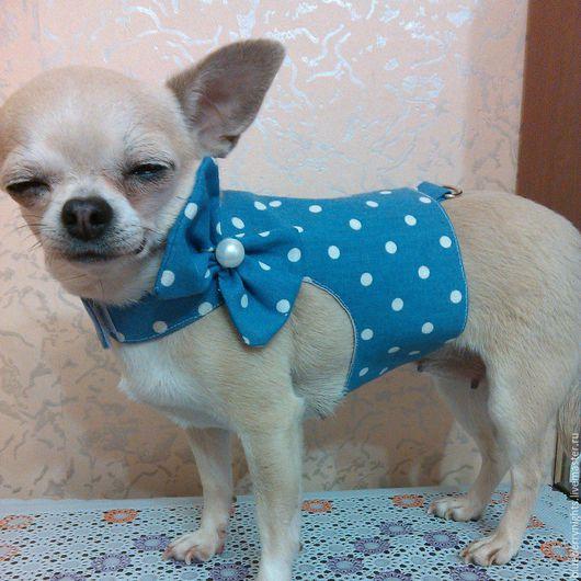 """Одежда для собак, ручной работы. Ярмарка Мастеров - ручная работа. Купить Желетка для собачки"""" Бусинка """". Handmade. Голубой, хлопок"""