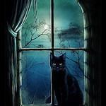 Розка Кошка - Ярмарка Мастеров - ручная работа, handmade