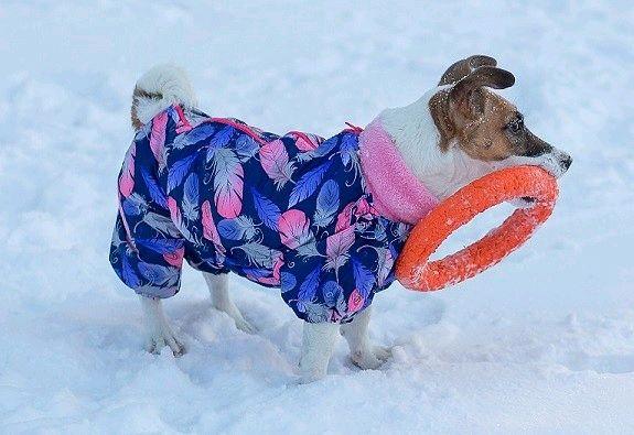 Одежда для собак, Одежда для питомцев, Новосибирск,  Фото №1