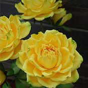 Цветы и флористика ручной работы. Ярмарка Мастеров - ручная работа Полноразмерные раскрытые розы  Мохана (Mohana). Handmade.