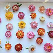Материалы для творчества ручной работы. Ярмарка Мастеров - ручная работа Сухие цветочки. Handmade.