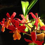 Картины и панно ручной работы. Ярмарка Мастеров - ручная работа фоторабота Орхидея. Handmade.