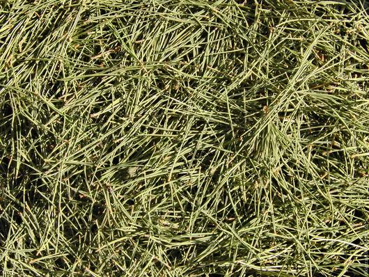 хвойный сбор купить травяная лавочка рустикальный полезный деревенский травка полевая луговая лесная лекарственные травы для ванны, соли, зубной пасты, ополаскивания ополаскивателя эко сувенир деревня