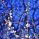 Фотокартины ручной работы. Ярмарка Мастеров - ручная работа. Купить Цветы вишни. Handmade. Синий, голубой, белый, цветы