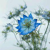 Цветы и флористика ручной работы. Ярмарка Мастеров - ручная работа МК Нигелла из фоамирана. Handmade.