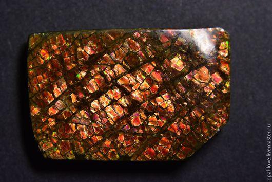 """Для украшений ручной работы. Ярмарка Мастеров - ручная работа. Купить """"Бабочки крыло"""" Коллекционный образец аммолита!. Handmade. Разноцветный"""