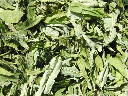 Иван-чай (иванов чай, иванъ-чай, иван-чай обыкновенный, иван-чай узколистный, иван-чай капорский, капорский чай, копорский чай, копор, кипрей узколистный, кипрей обыкновенный, хамериум узколистный...)