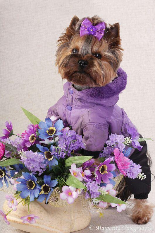 """Одежда для собак, ручной работы. Ярмарка Мастеров - ручная работа. Купить Комбинезон """"Яркий"""". Handmade. Одежда для собак, йорк, флис"""