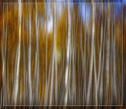 Фотокартины ручной работы. Ярмарка Мастеров - ручная работа. Купить Осенняя. Handmade. Осень, осенний пейзаж, золотистый, стволы, живописный