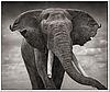 Cеребряный слон (s-elephant) - Ярмарка Мастеров - ручная работа, handmade
