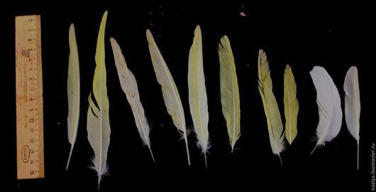 Другие виды рукоделия ручной работы. Ярмарка Мастеров - ручная работа. Купить Перья(перо) попугая натуральное, корелла. Handmade. Попугай