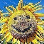 Солнечный круг - Ярмарка Мастеров - ручная работа, handmade