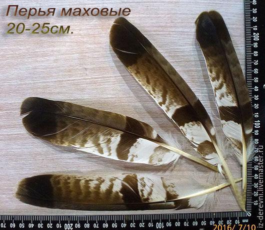 Перья ястреба маховые 20-25 см.  При заказе 10ти одинаковых перьев - 11е В ПОДАРОК! При заказе перьев разного размера на сумму более 1.500 руб - скидка 10%